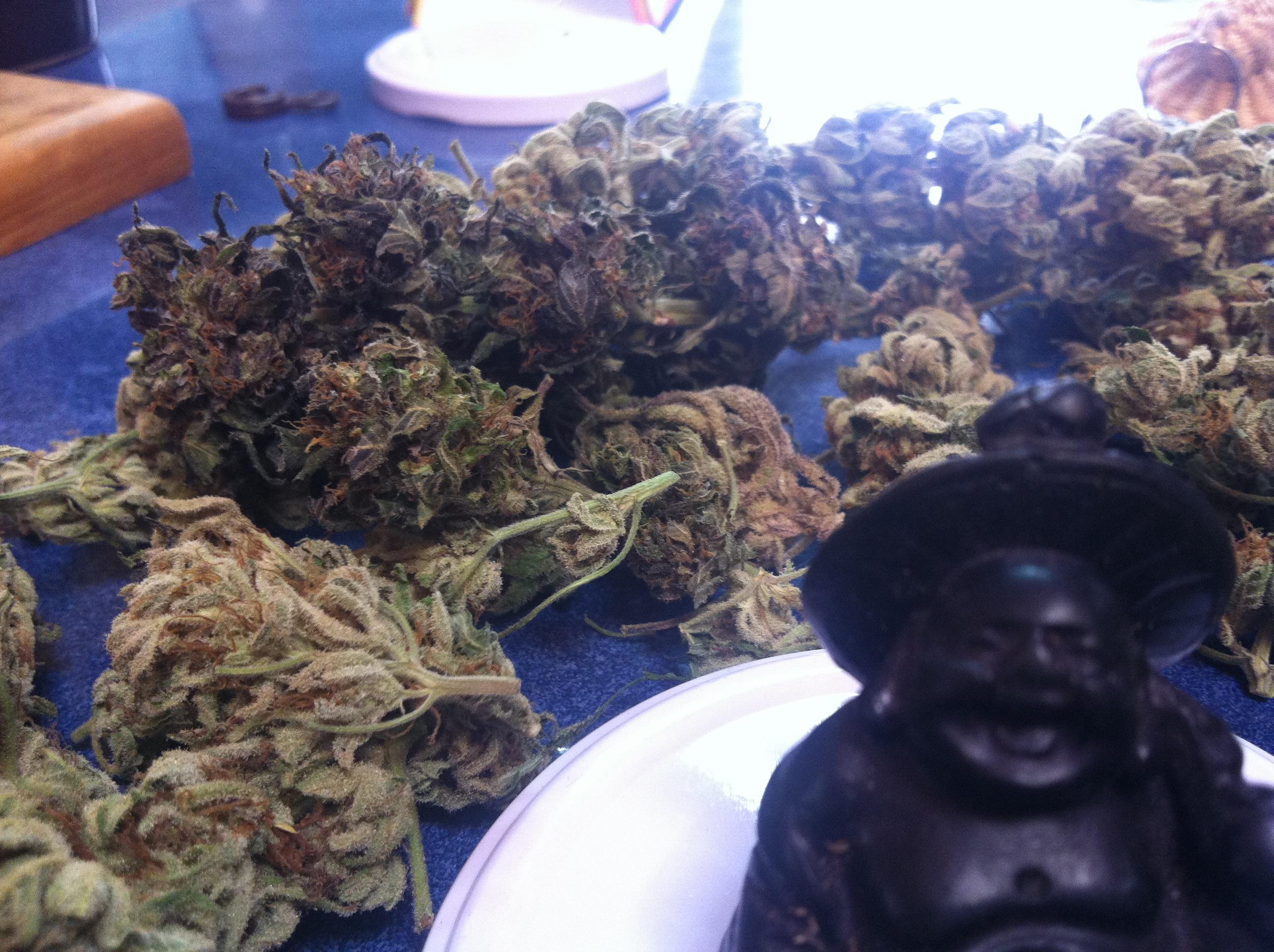 Para que enfermedades sirve el cannabis medicinal?