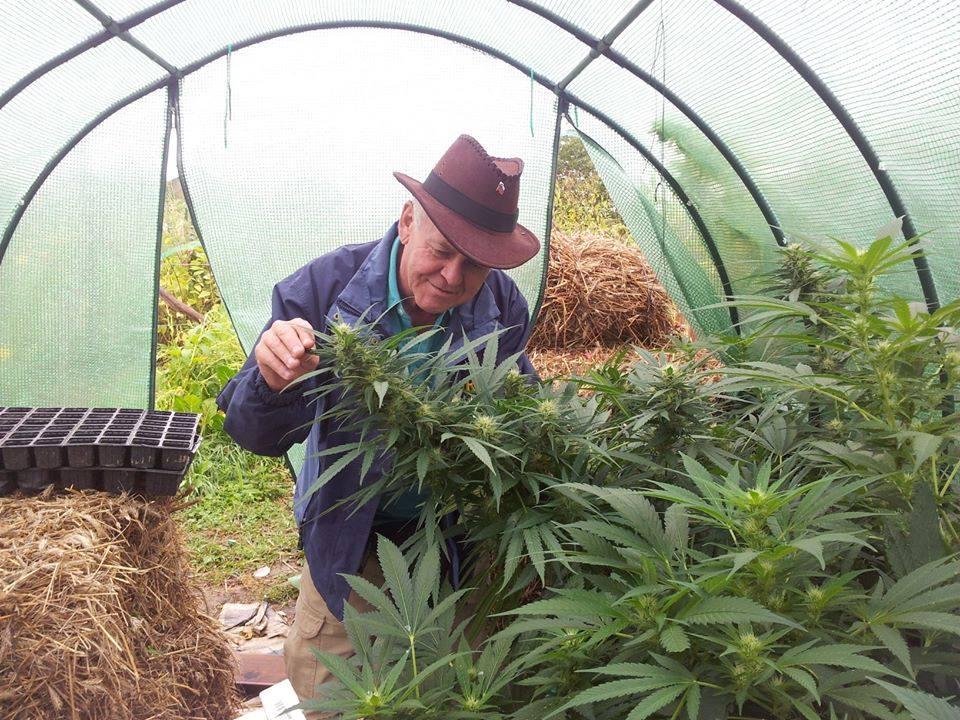 Tratamientos con Aceite de Cannabis