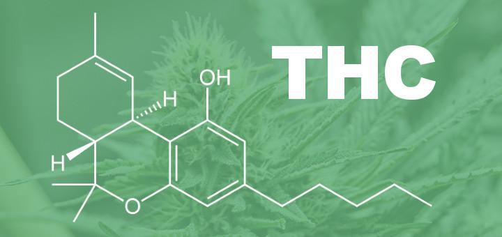 6 Datos sobre el THC